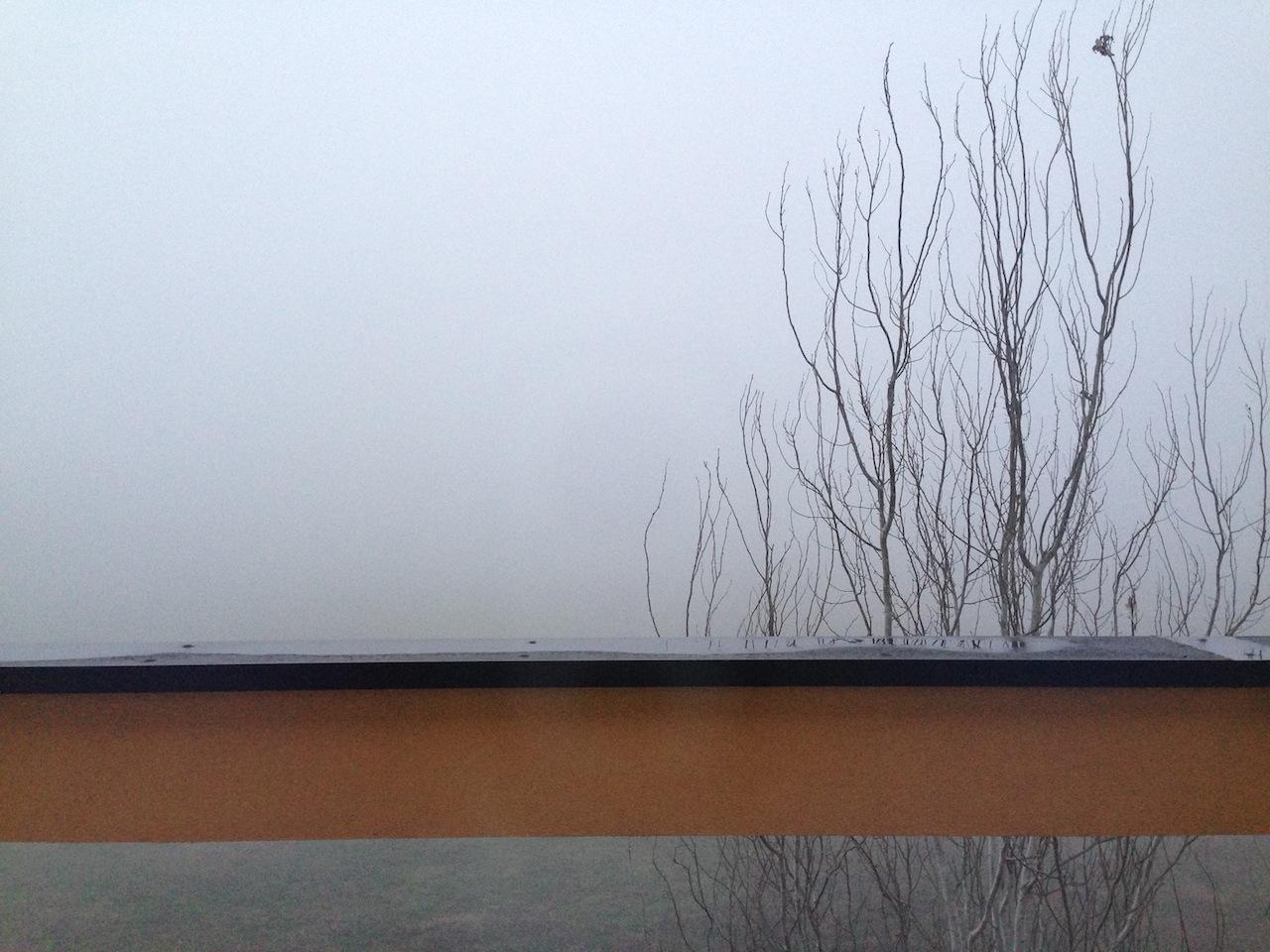 albero su nebbia