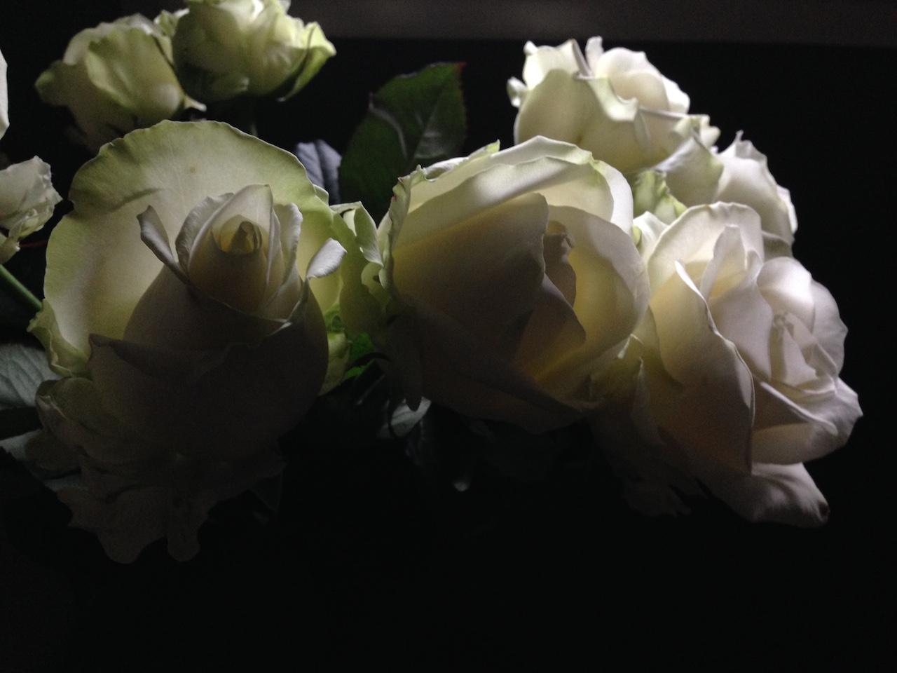 Le rose di Dio